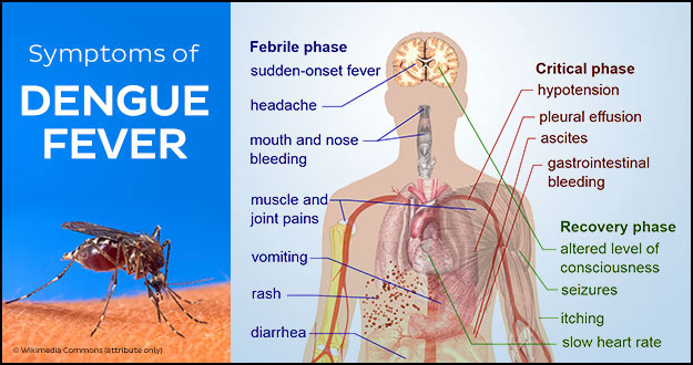 preventing dengue fever in the mauritius Dengue fever is caused by dengue virus where the symptoms are characterised by fever, headache, severe joint pains, skin rashes, etc dengue is caused by a family of viruses, carried by mosquitoes, especially the aedes aegypti.
