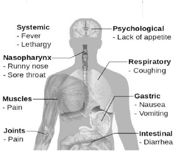 Structure-of-swine-flu-sushaanth-homeoclinc-chennai